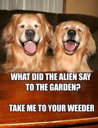 Golden Retriever Meme - funny golden retriever alien joke meme postcard aliens funny