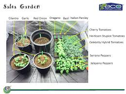 Winter Indoor Garden - indoor salsa garden archives eco garden house
