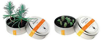 plant on desk plants in cans cool mini desktop gardens the green head