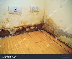 Fix Laminate Floor Water Damage Water Damaged Wall Laminate Floor Which Stock Photo 628976582