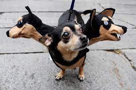 cerberus 3 headed dog spirit halloween 10 dog photos of sheer greatness and hilarity for national dog day