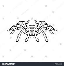tarantula tattoo stock vector 177039740 shutterstock