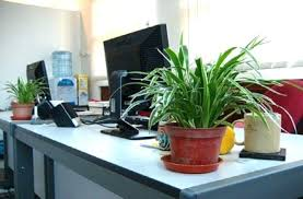 Indoor Plant For Office Desk Small Plants For Office Desk Singapore Tag Office Desk Plant