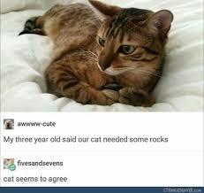 Funny Animal Memes Tumblr - new funny tumblr post random humor pinterest wallpaper site
