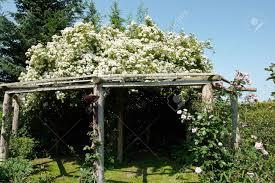 wooden pergola gazebo in a beautiful blooming garden full of
