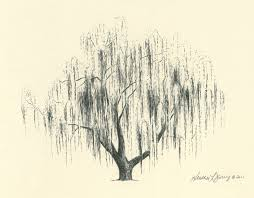 reserved for amanda weeping willow tree drawing by theinklab