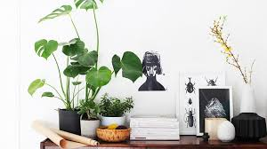 plant on desk amusing desk plant innovative decoration desk plants awesome the