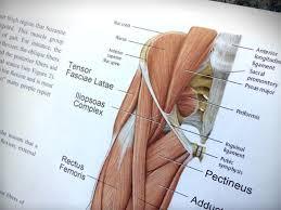 Dr Barnes Chiropractic Dr Barnes U0027 Article On Hip Flexor Tensegrity Chiropractic