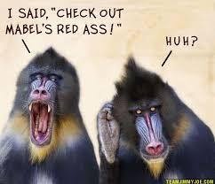 Baby Monkey Meme - the 25 best monkey memes ideas on pinterest dispatcher salary