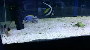 powder blue tangs are a to keep youtube