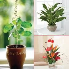 home decor 8 beautiful plants to grow indoors slide 1 ifairer com