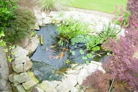 How To Make A Koi Pond In Your Backyard Koi Pond