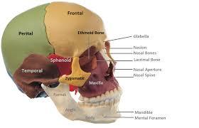 Base Of The Skull Anatomy Anatomy Made Easy Anterior View Of Skull