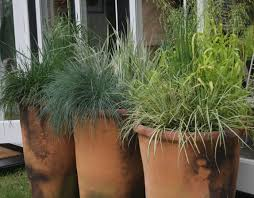 ornamental grasses in terracotta plant pots garden containers