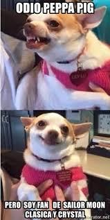 Memes De Chihuahua - odio peppa pig pero soy fan de sailor moon clasica y crystal