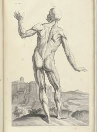 Pictures Of The Anatomy Of The Human Body Historical Anatomies On The Web William Cowper Home