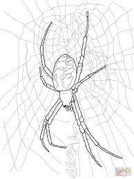 black yellow garden spider coloring free printable
