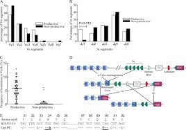 difference between kappa and lambda light chains lambda light chain revision in the human intestinal iga response
