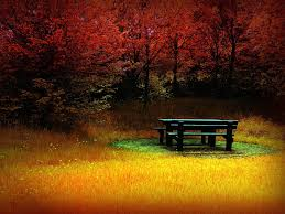 thanksgiving themed wallpaper fall foliage wallpapers for desktop wallpaper cave download