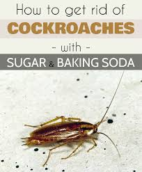 cleaning ideas how to get rid of cockroaches with sugar and baking soda