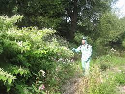 invasive non native plants get involved inns control dee invasive non native species project
