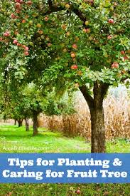 tips for planting and caring for fruit trees