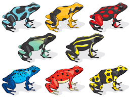poison dart frogs basic information plus top 10 facts pestwiki