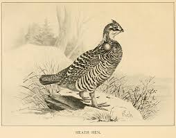 Thanksgiving Bird To Extinction Happy Thanksgiving Bird Eaters The Why Files