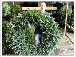wholesale trees and wreaths jarrettsville nurseries at