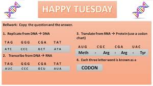 happy tuesday codon bellwork copy the question and the answer