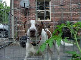 temporary dog fence home peiranos fences best temporary dog