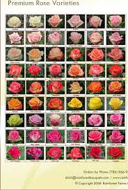 roses and its names roses names and collection