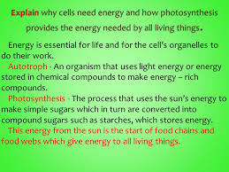 which plant cell organelle uses light energy to produce sugar chapter 9 2 9 3 energy is essential for life and for the cell s