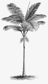 tropical leaves coconut tropical tree seaside png image and