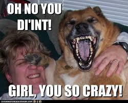 Crazy Dog Lady Meme - laughing with your best friend priceless i has a hotdog dog