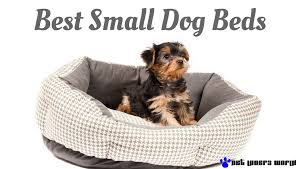 Clamshell Dog Bed by Best Collections Of Dog Beds For Small Dogs All Can Download All