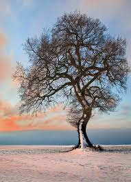 tree in snow seen in explore highest position 5 a closeu flickr
