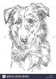 border collie stock vector images alamy