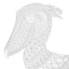Amazon Com Duck Covers Elegant - millie marotta u0027s curious creatures 9781849943659 amazon com