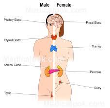 Anatomy Pancreas Human Body Glandular Structure Human Anatomy Organs
