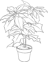 poinsettia christmas flower coloring pages flower coloring pages