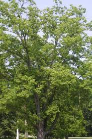 understanding the growth rate of trees winnipeg free press homes