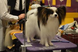 dog grooming tables for small dogs best grooming tables for small dogs petful