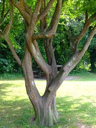tree trunk free early years primary teaching resources eyfs