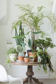 Plants Home Decor Best 25 Plant Table Ideas On Pinterest Green Decoration Potted