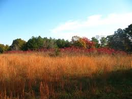landscape basics color theory uga cooperative extension