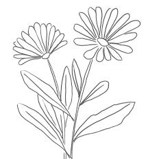 fiori disegni cerchi disegni di fiori ecco qui primule bucaneve viole e