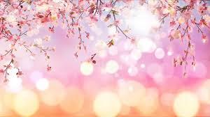 cherry blossom pics 3d render of cherry blossom on bokeh lights background photo