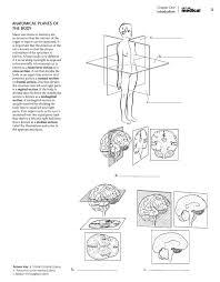 Human Anatomy Planes Of The Body Anatomia Dibujos