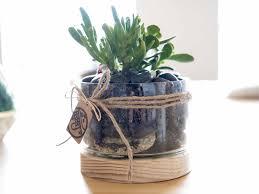 How To Make A Succulent Planter by 9 Steps To Make A Terrarium Realestate Com Au